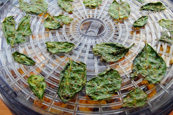 #TipTuesday | Dehydrator 101: Pre-Treating Foods